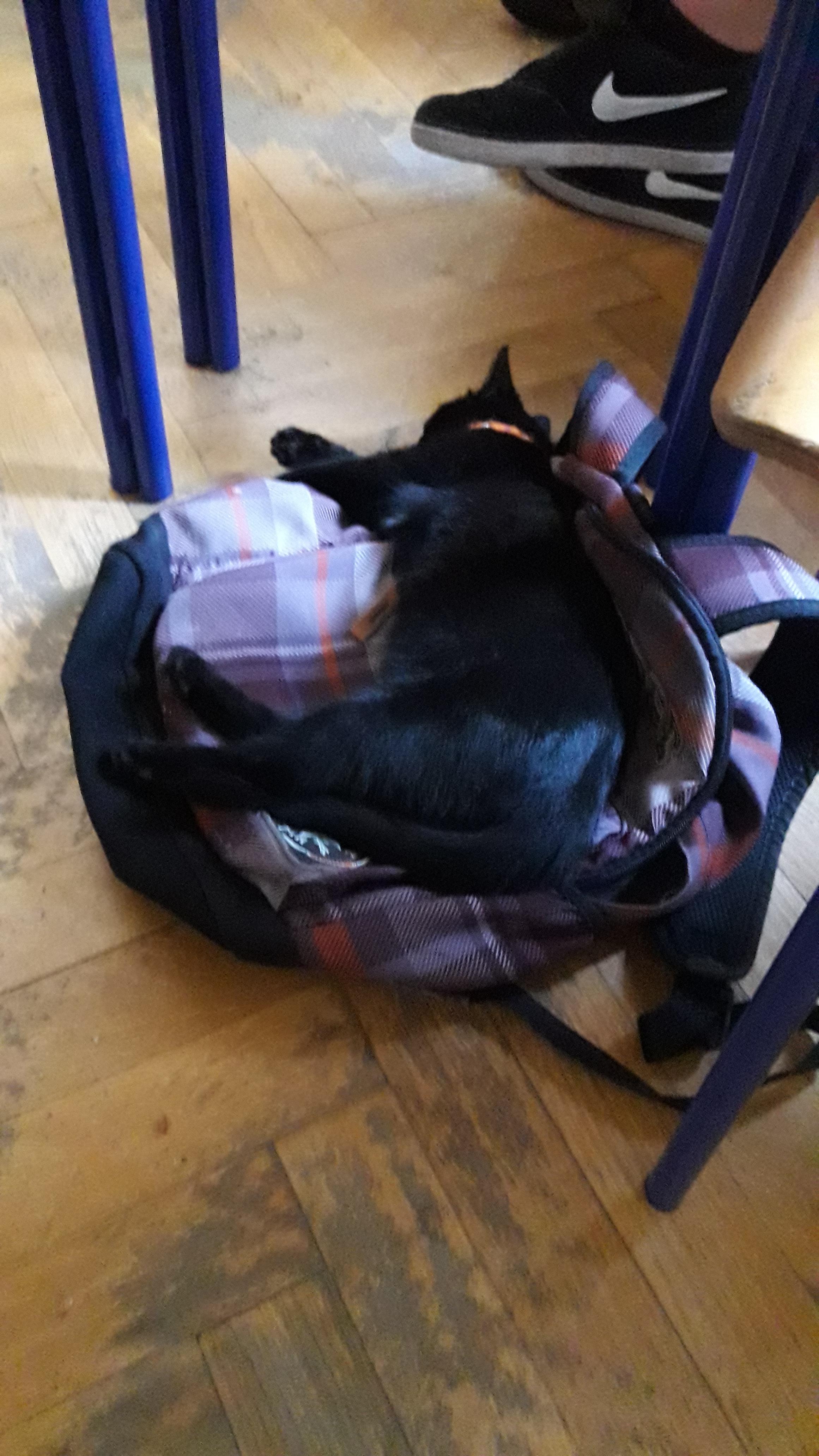 javna crna maca Donna crveni lezbijski porno