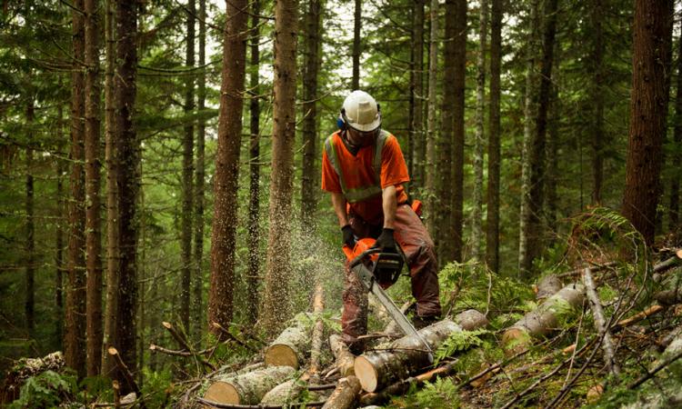 podaci zavoda podaci zavoda Sektor poljoprivrede i šumarstva u našoj županiji traži 53 puta više ljudi Cijeloj Hrvatskoj nedostaje radne snage, a ogroman skok u odnosu na lipanj ove godine u broju prijavljenih mjesta u Varaždinskoj županiji doživio je sektor poljoprivredne i šumarstva...